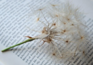 dandelion_big_book