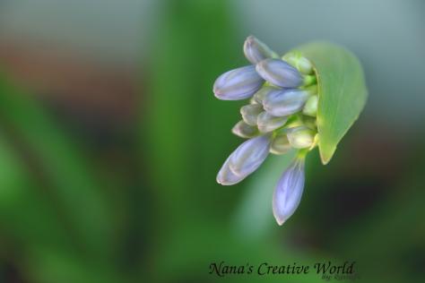 flower_purple_garden_closeup