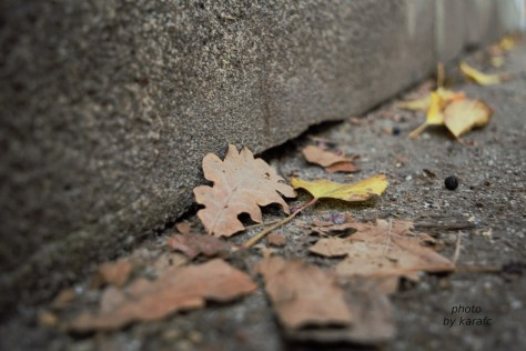 autumn leaves on the sidewalk