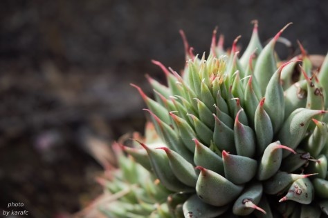 close up shot of a succulent plant