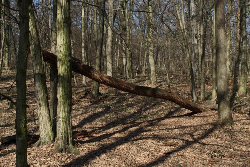 A walk at Bratislava Forest Park - Koliba -tree shadows