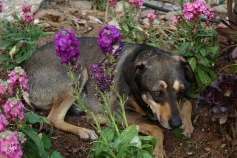 dog_pet_photography