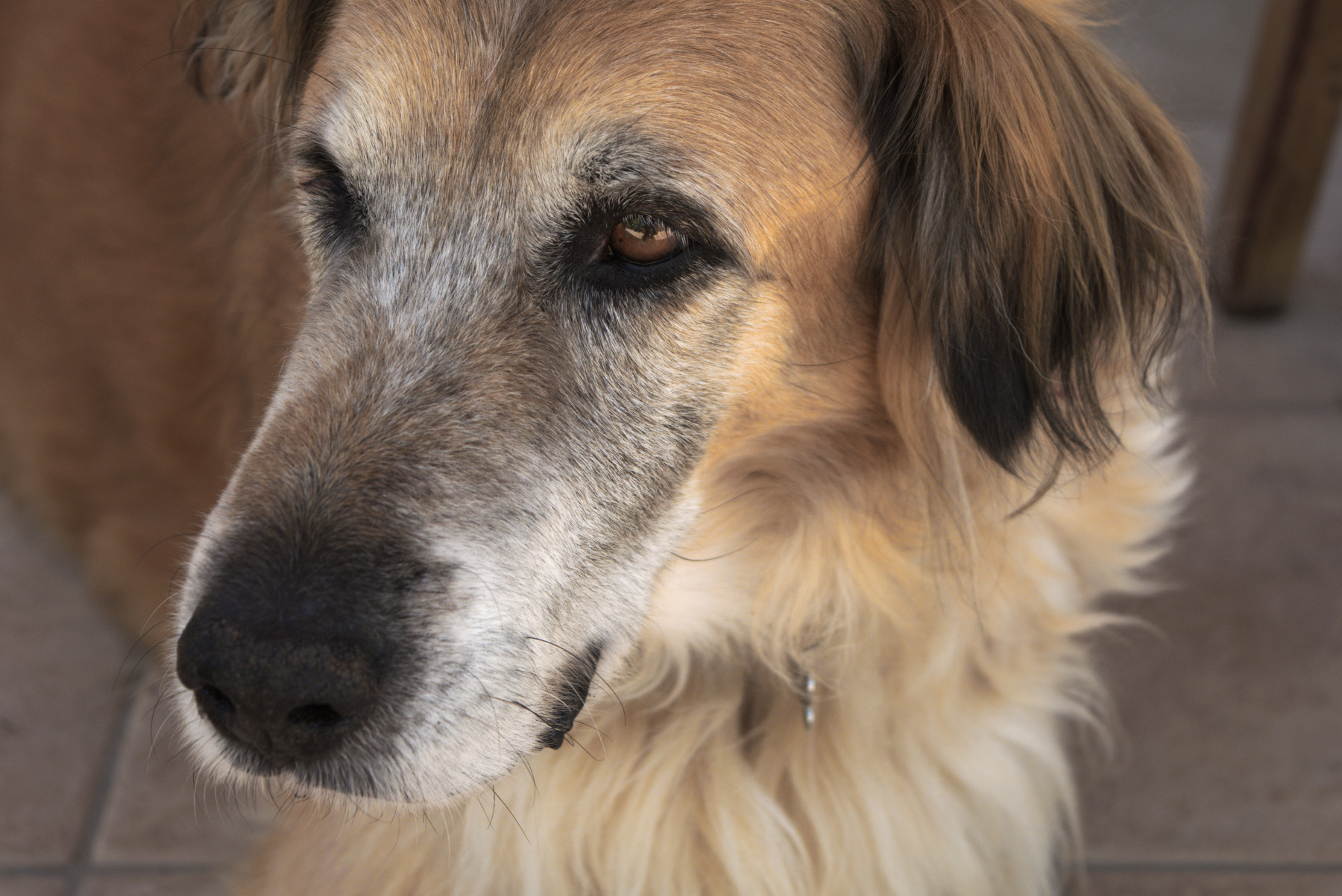 dog-Max