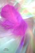 Purple feather | by karafc